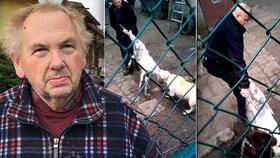 Šokující podívaná: Majitel se přetahuje o kozu se svými psy. Nehoda, nebo zvrácená zábava?
