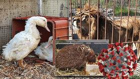 Pražská zvířecí nemocnice v nouzi. Kvůli koronaviru dochází finance i krmení, hrozí její zánik