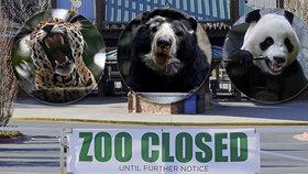 Ředitelka zoo šokovala: Nemáme peníze, některými zvířaty budeme muset nakrmit šelmy