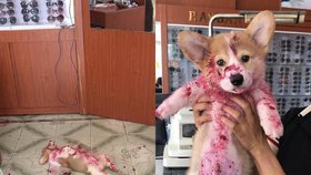 Pes, který si hraje na mrtvého! Kratochvíle tohoto zvířecího miláčka je na infarkt