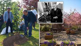 Botanická zahrada opět otevřená pro návštěvníky: Zrovna tu rozkvetla Havlova sakura!