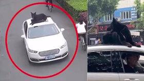 Šofér si naložil pejska na střechu a vezl ho na kapotě! Dovnitř by se mu prý nevešel!