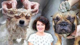 Máme plno do června, říká majitelka psího salonu. Bez péče může mít zvíře zdravotní potíže