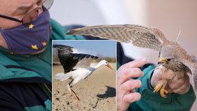Záchranná stanice vypustila 314 zvířat: Čápa, který zapomněl odletěl, nebo poštolku s probodnutou nohou