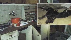 Kočky prý chovala na maso a doma měla psa bez hlavy: Policie dopadla tyranku Janu z Pardubic!