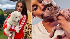 Krásky Budková a Salačová hlásí: Nové přírůstky do rodiny!