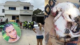 Udělali si z koček boxovací pytel! Dva zápasníci měli umlátit zvířata k smrti