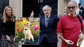 Johnson řeší skandál svého poradce, premiérova snoubenka první narozeniny jejich psa