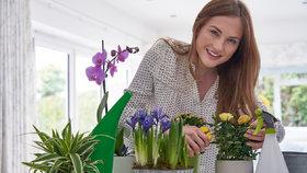 Chcete krásné pokojovky? Vyzkoušejte na hnojení netradičně lógr, sirky nebo slupky