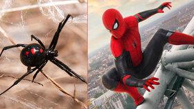 Tři chlapci se nechali kousnout jedovatým pavoukem! Doufali, že budou jako Spider-Man!