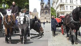 Atrakce pro turisty nebo týrání zvířat? Z centra Prahy by mohly zmizet koňské povozy