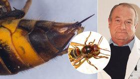 Nedá se předvídat a zabíjí! Odborník popsal děsivé následky alergické reakce na bodnutí hmyzem