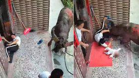 Děsivý útok zuřícího býka na maminku s děťátkem: Video zachytilo boj o život miminka!