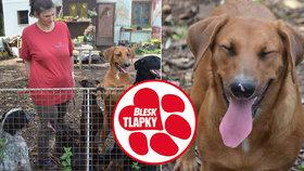 """Psy zavřené v zápachu a špíně čeká odebrání. Svérázné """"chovatelce"""" už sebrali 22 zvířat"""