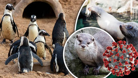 """Koronavirus zlomil vaz první zoo. Ze stovek zvířat jsou ze dne na den """"bezdomovci"""""""