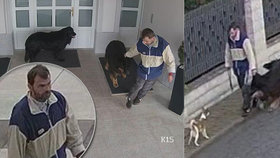 Nešikovný zloděj zpackal krádež psa: Natočily ho kamery a chlupáč mu utekl zpátky domů