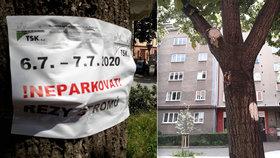 Lidé z pražských Vršovic se diví: Proč řežete větve v lipové aleji? Odborníci na to mají jiný názor