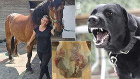 Do dvou koní u Karviné se zahryzl pes: Z díry v ruce jezdkyni lezly žíly, popsala kamarádka Milena