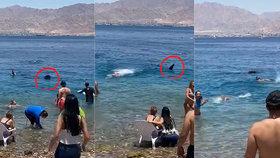 Scéna skoro jako z hororu Čelisti: V dovolenkovém ráji k pobřeží připlul žralok, panika byla zbytečná