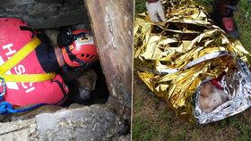 Hluchý labrador zmizel, po třech dnech se ozvalo zoufalé kvílení: Uvízl v odpadní rouře