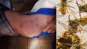 Hejno vos napadlo babičku a malého vnoučka: Dítě nepřežilo! Žena skončila v nemocnici