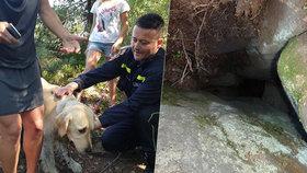 Zlatý retrívr spadl při procházce do rokle: Uvězněn zůstal v hloubce pěti metrů