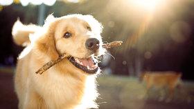 7 psích hrdinů, na které nikdy nezapomeneme! Tihle se svými odvážnými činy zapsali do historie