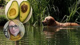 Nečekané otravy psů: Z koupání v rybníku i avokáda! Hrozí zvracení i křeče, popsala veterinářka