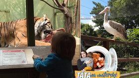 Táta na mateřské: Tipy a triky pro Zoo Praha. Kde nechat spát dítě a proč přijít v zimě
