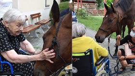 Foto, které chytne za srdce: Seniory v domově důchodců potěšil terapeutický kůň