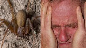 Seniora (60) ve spánku kousl jedovatý pavouk. Málem přišel o ruku, došlo i na transplantaci