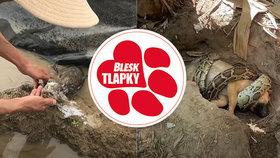Štěně na kolejích a odporné triky podvodníků: Kvůli výdělku předstírají záchranu zvířat