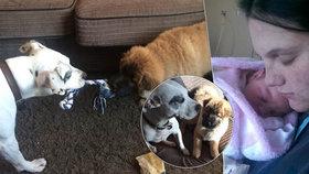 Miminko (†12 dní) rozsápal rodinný pes: Sousedi popsali, co hrůze předcházelo!