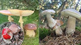 """Houby v lese dělají """"psí kusy""""! Mykolog vysvětlil, proč se to děje"""