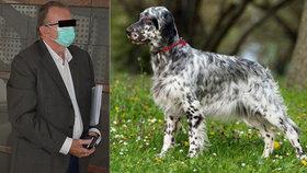 Zvídavé štěně setra vyběhlo ze zahrady a srazilo motorkáře: Soud případ zastavil