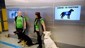 Očenichání místo testu: Na prvním evropském letišti nasadili do akce psy