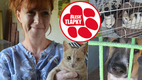 Dodávka plná zablešených a nemocných zvířat: Celníci zastavili transport psů a koček do Německa