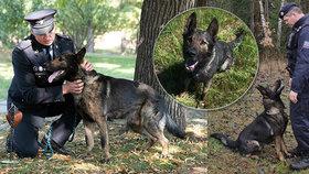 Čtyřnohý hrdina Noris: Žena se chtěla zabít, pes ji vyčenichal ve srubu v hustém lese! Dostal ocenění
