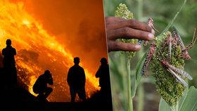 Katastrofický rok 2020: Vedle covidu řádily i povodně, požáry, bouře a kobylky