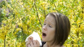 Alergici mají nyní těžké období.