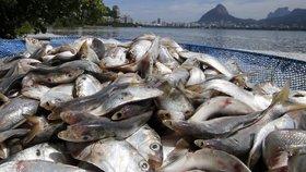 Lagunu zahltilo 80 tun ryb