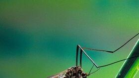 Malárii stejně jako jiné nemoci přenáší komáři.