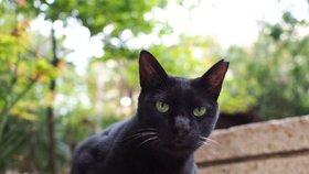 Jsou černé kočky skutečně zodpovědné za vaši smůlu?