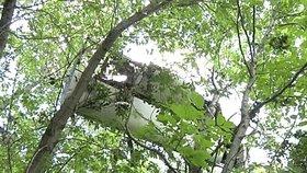Vyšetřovatelé našli kusy letadla na stromě