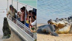 Krokodýl Brutus na sebe upozornil po celém světě zejména, když byly tento týden zveřejněny fotky, na kterých si pochutnává na žralokovi. V Austrálii je ale již delší dobu místní celebritou.