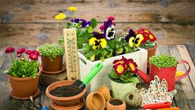 V březnu je čas založit  nové záhony, případně vyměnit na nich jednotlivé plodiny.  Když na stejném místě pěstujete jednu rostlinu více let, tak méně a méně plodí.