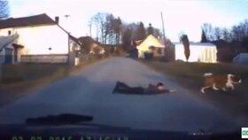 ... a tak ho fenka přetáhla přes silnici.