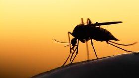 Pozor na nebezpečný hmyz
