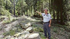 Šumavský les, zmrzačený nelegální těžbou, ukázal nprap. František Fusch.