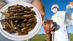 Červi z Mexika či maso z klonovaných krav a jejich telat? V Bruselu se řešila budoucnost našeho stravování